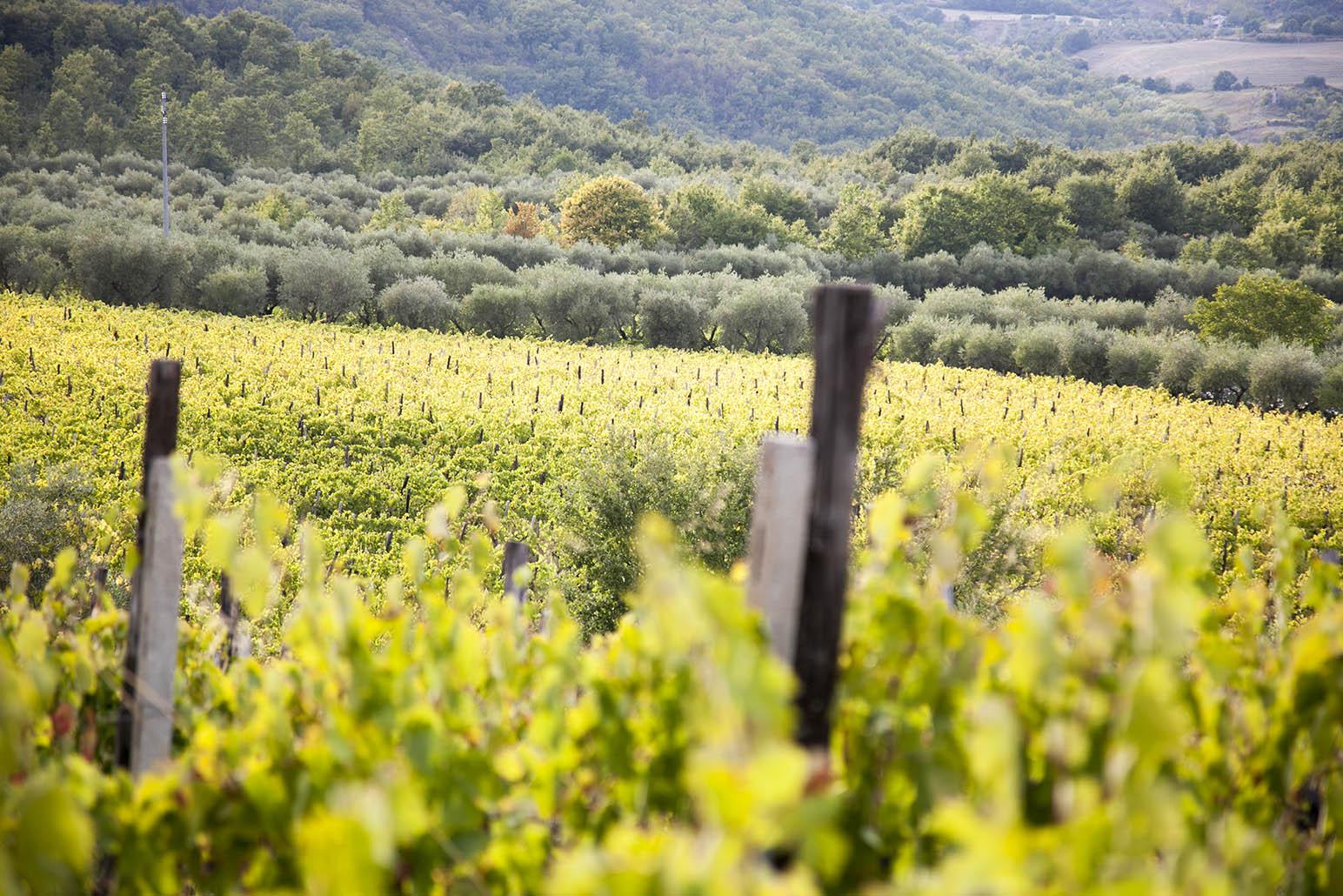 Colle Sereno Vineyards